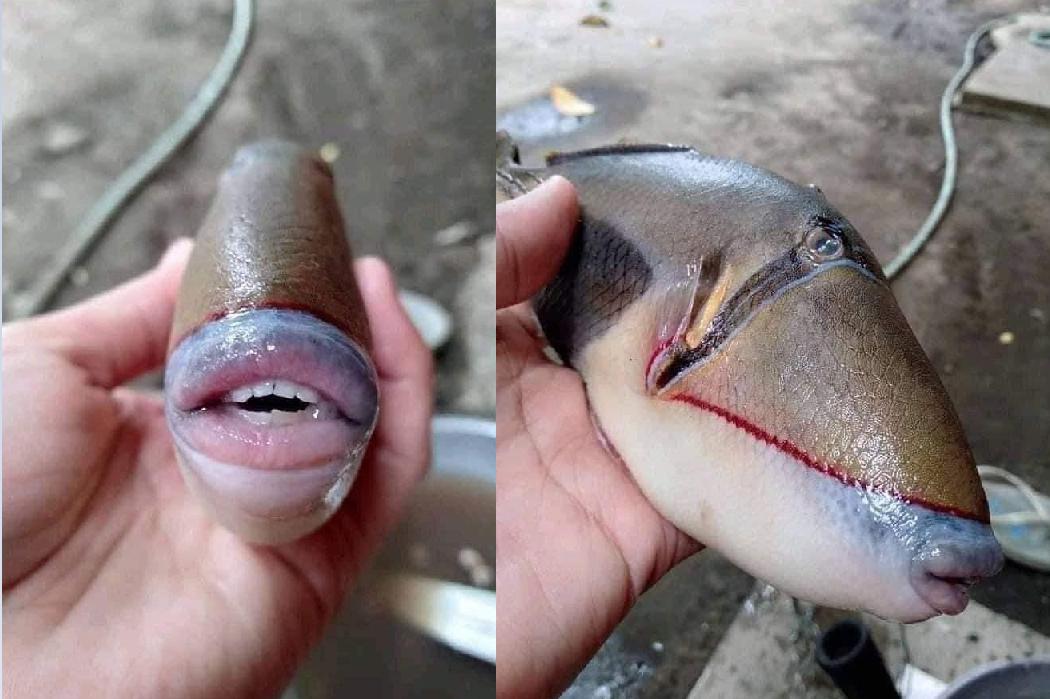 捕獲海上怪魚!張嘴驚見「人形牙齒」 恐怖模樣網嚇傻