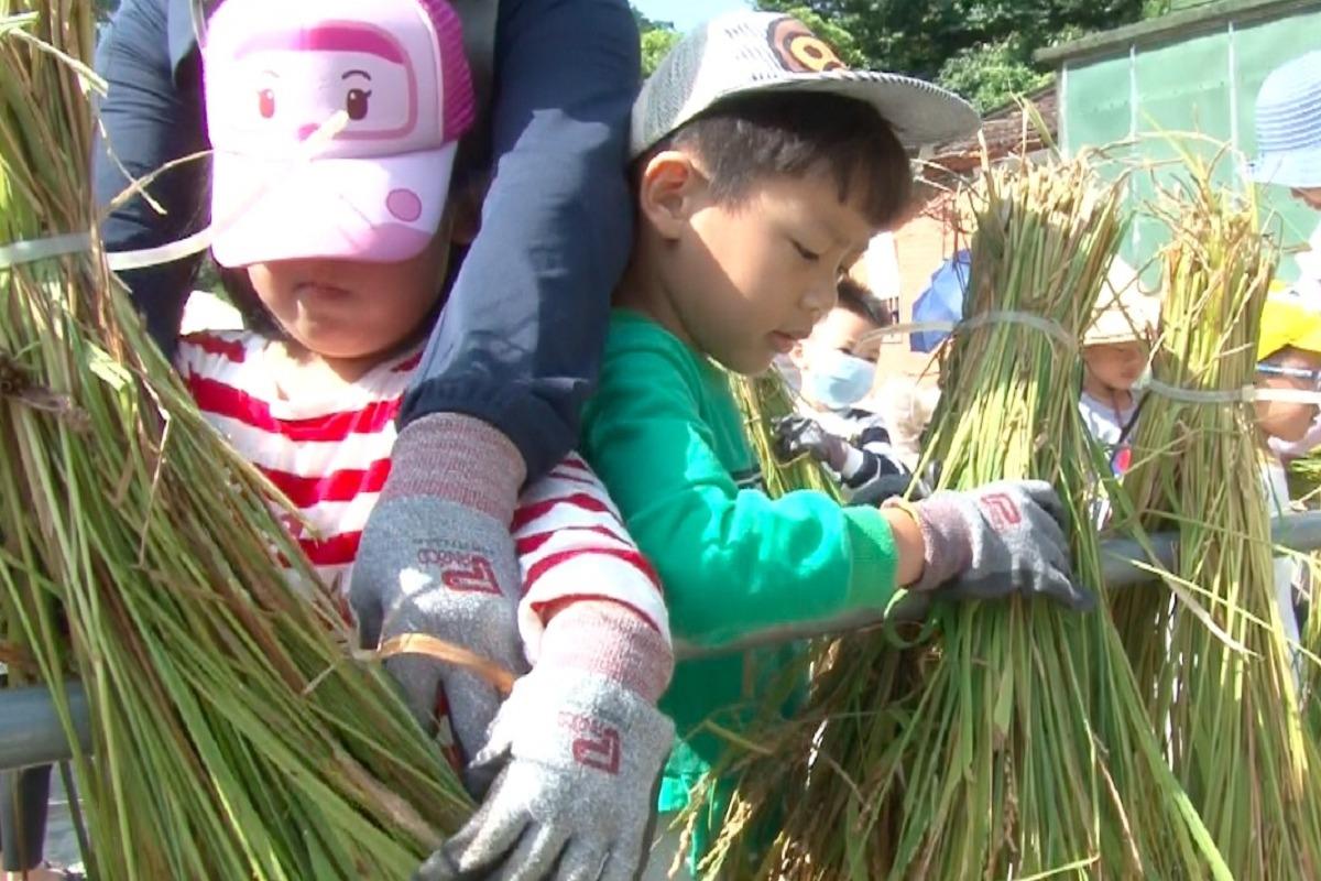 農田中的結業式 老梅國小體驗曬穀文化