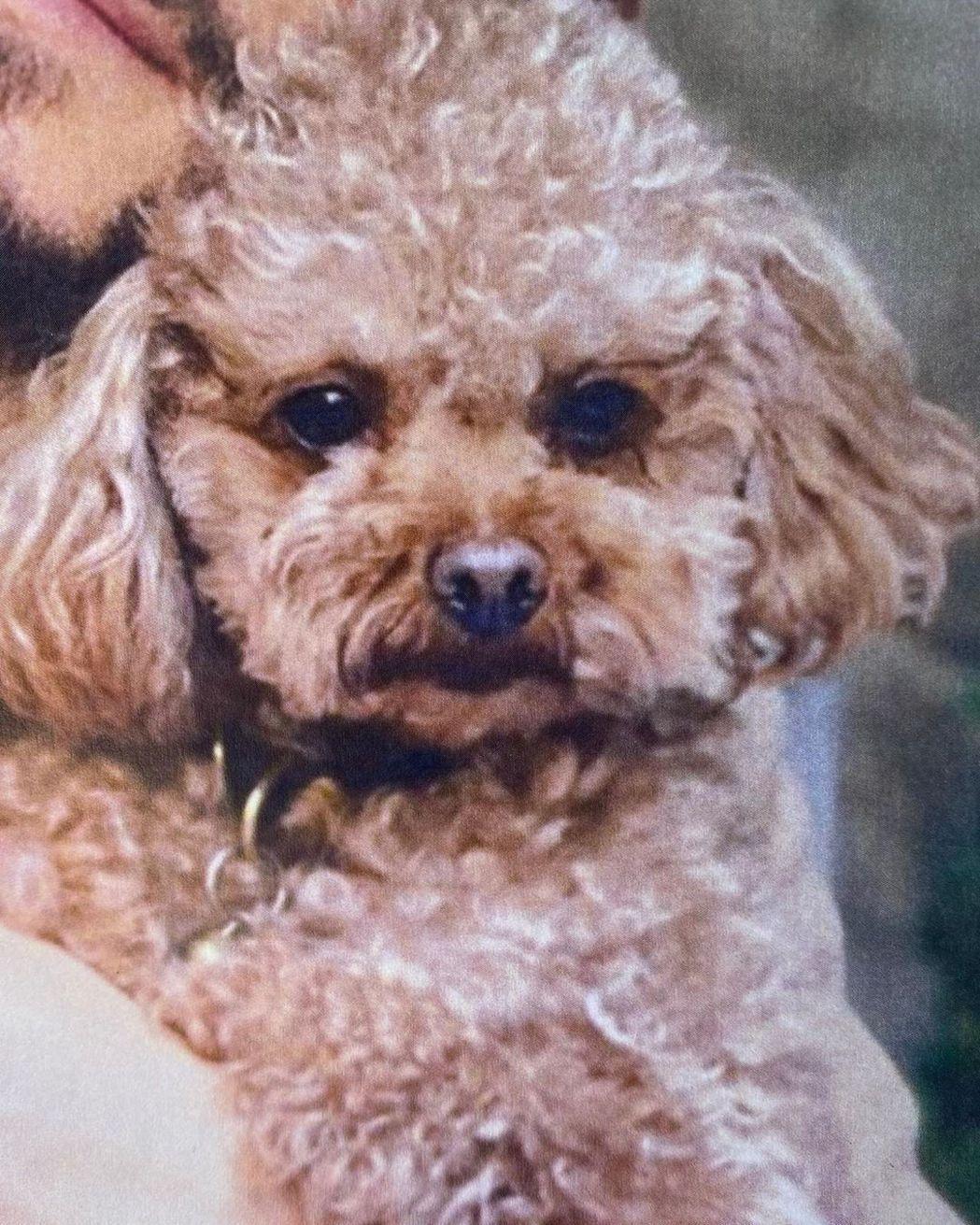 Mighty是奧蘭多布魯與凱蒂佩芮的愛犬。圖/摘自Instagram