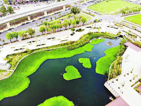 台中市政府引活水、綠美化,成功搶救星泉湖重生,宛如魔法。