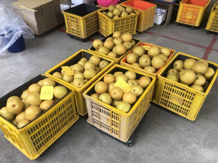 金黃圓潤的新興梨,都是卓蘭農民用心栽培的結晶。 圖/活源行銷提供