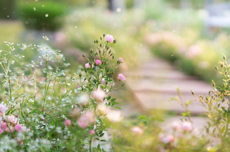 花園示意圖。圖/ingimage