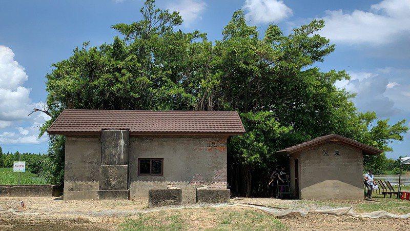台南市六甲區菁埔埤抽水站建物被大榕樹包住,才能在60年後保留下來重新被發現。記者吳淑玲/攝影