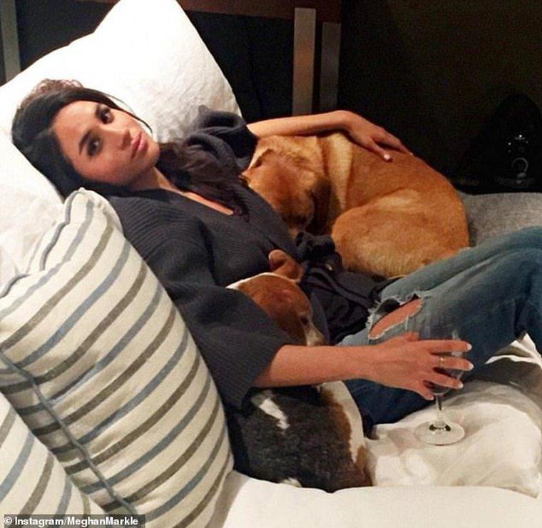 梅根先前身邊常有愛犬陪伴。圖/摘自IG