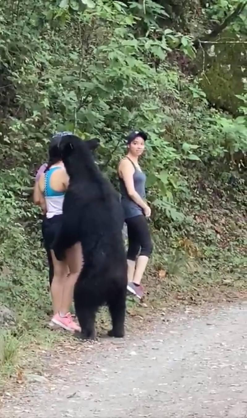 影片中可見,黑熊站立起來嗅聞其中一名登山女子。圖擷自Twitter