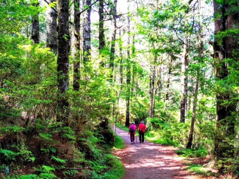 走在向陽國家森林遊樂區內的紅檜步道,可享受天地靈氣。 圖/天龍飯店提供
