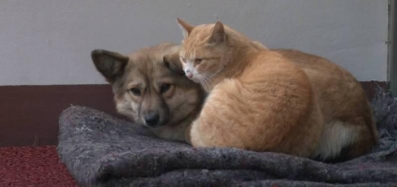 忠犬等不到主人,流浪貓暖心安慰。圖片來源/ youtube