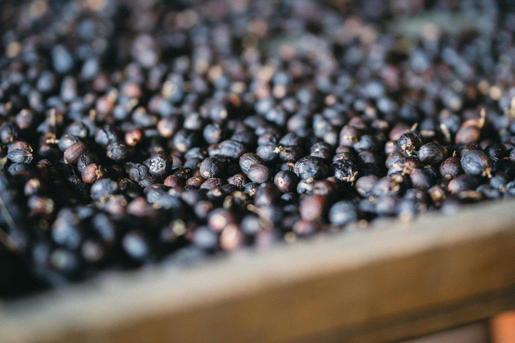 森悅高峰的咖啡,風味有著明亮的黑醋栗、厚實的體脂感。 圖/咖啡空少提供