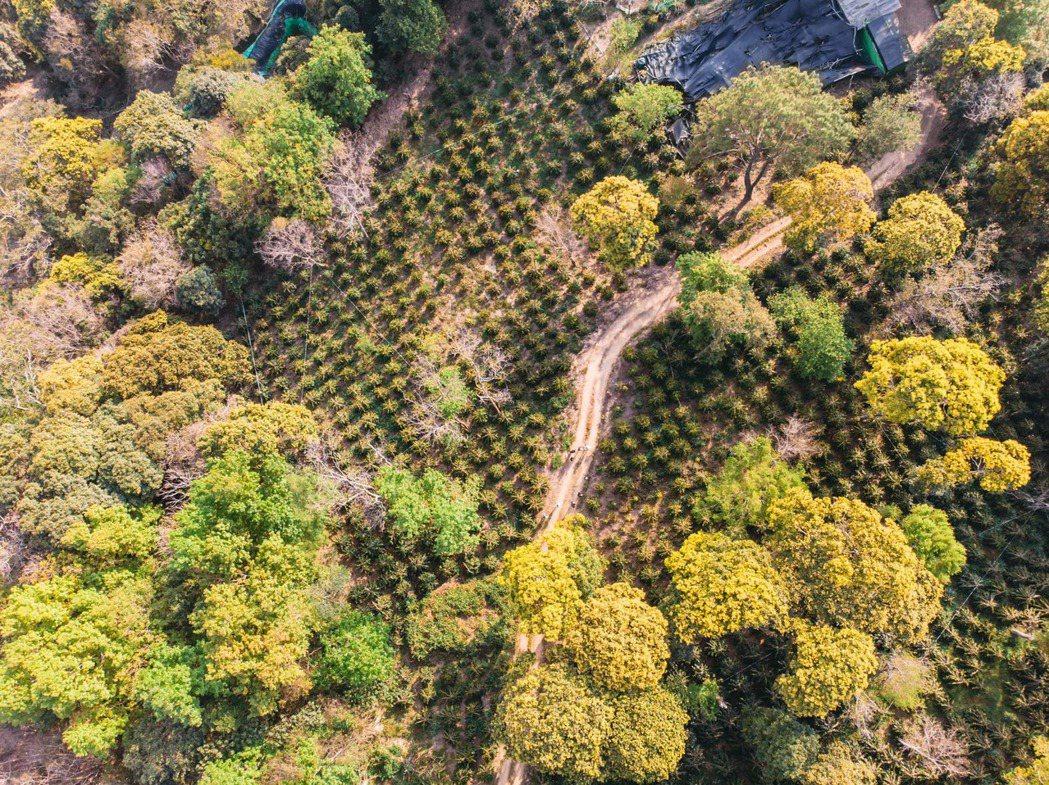 森悅高峰咖啡莊園位於霧社高峰約1400米以上海拔的地區。 圖/咖啡空少提供