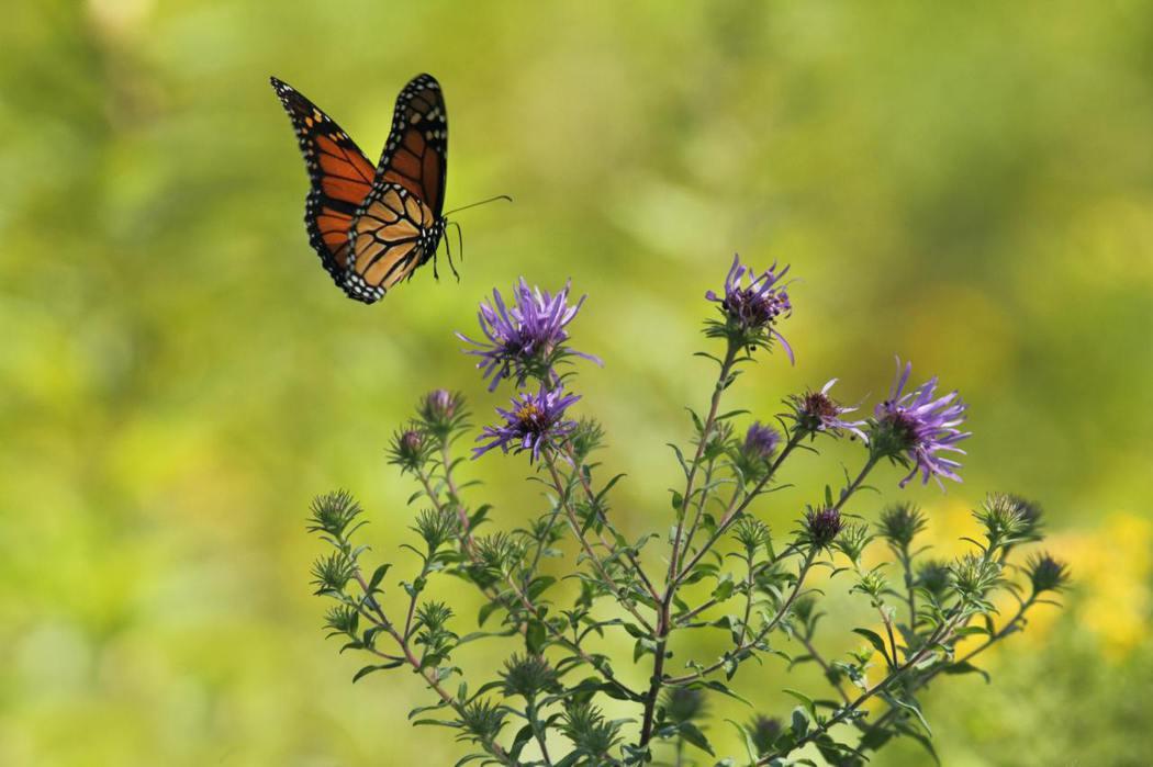 巴西的蝴蝶,真的能製造德州的颶風嗎?