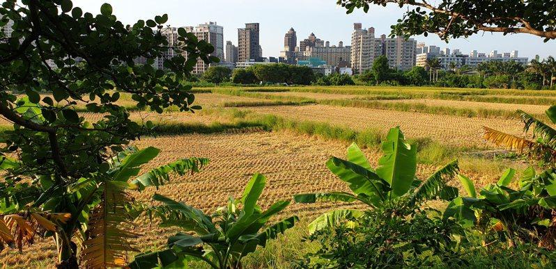 一期稻收割後,二期稻整地用水是否無虞引起農民關注,圖為桃園區、蘆竹區交界一期稻收割後起情形。記者鄭國樑/攝影