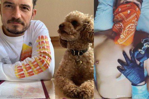 英國男星奧蘭多布魯(Orlando Bloom)日前透過社群網站發出尋狗啟事,他的愛犬Mighty失蹤了,而經過7天的搜尋,奧蘭多布魯22日曝光事件發展,Mighty已經過世,僅留下項圈讓他賭物思犬...