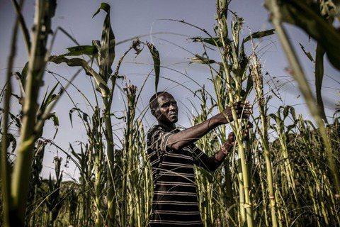 還沒病死,就先餓死?非洲疫情下的經濟與糧食危機