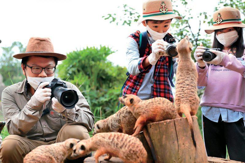跟著生態達人拍攝狐獴家族。