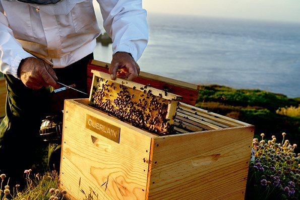 嬌蘭投入在蜜蜂保育。圖/嬌蘭提供
