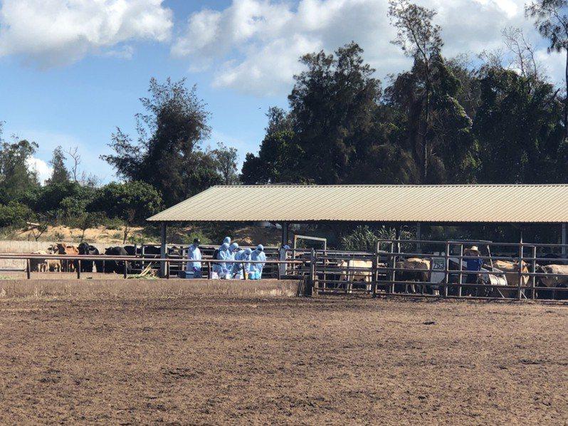 台灣各地來支援的獸醫,今天共分8組作業,優先針對畜試所等案例場,與一些通報的案例場進行施打疫苗。記者蔡家蓁/攝影