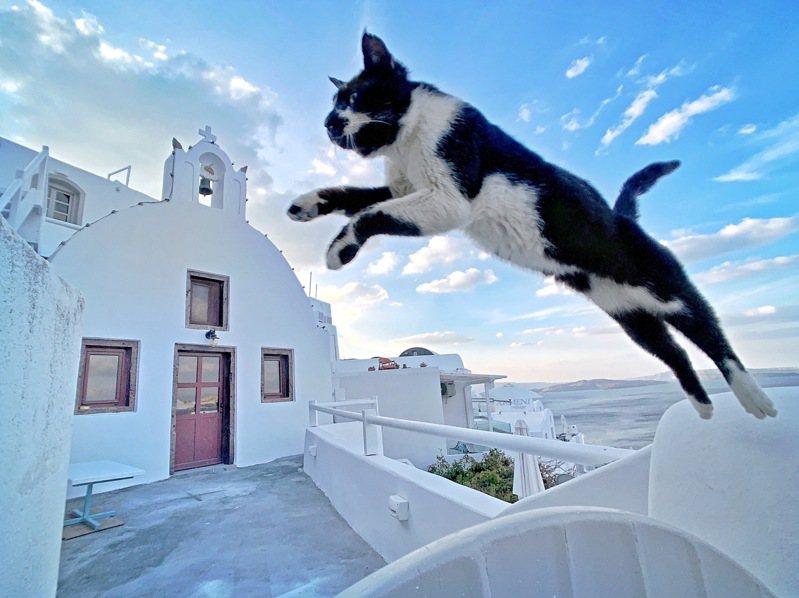 吳佳芳使用iPhone X,在一大早的希臘聖托里尼,捕捉到貓咪悠閒在藍天大海與白色小屋之間的飛躍瞬間。圖/蘋果提供