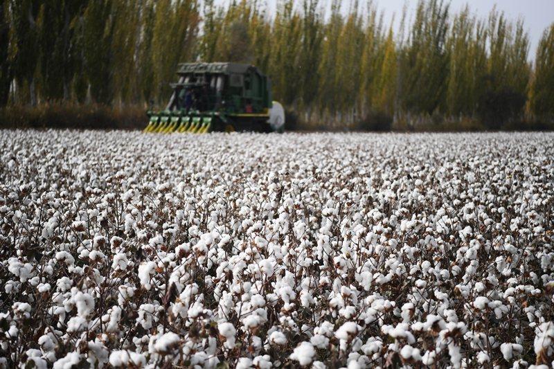 新疆是中國在棉花與紡織品等領域之重要生產製造源頭。 圖/新華社