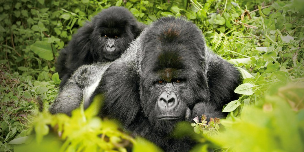 康寧推出Corning® Gorilla® Glass Victus™,是行動消...