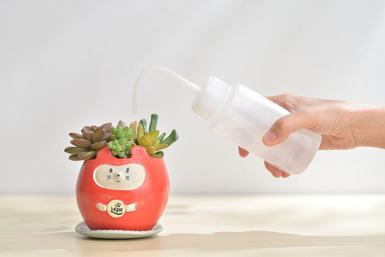 照顧多肉時,可多觀察植物表面,缺水才澆水。 圖/有肉Succulent & Gi...