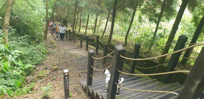 台中市府與旅行業者踩線,至和平區埋伏坪登山步道探勘,要推出有人文歷史味的套裝行程。記者游振昇/攝影