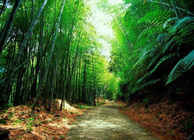 媲美京都嵐山步道的瑞里綠色隧道。 圖/縣府文觀局提供