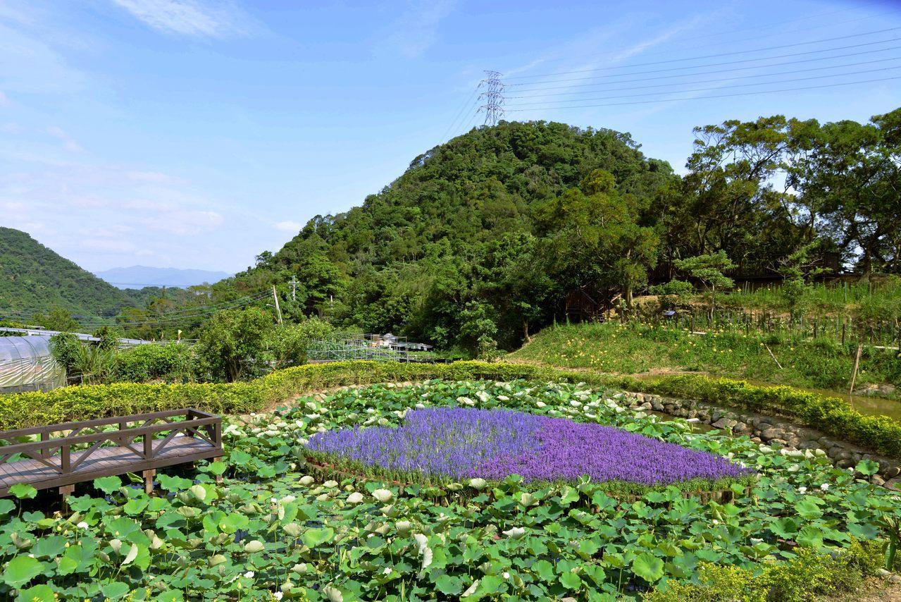 白石湖同心池旁栽種各色花卉,盛開期繽紛美麗。 圖/大地處提供