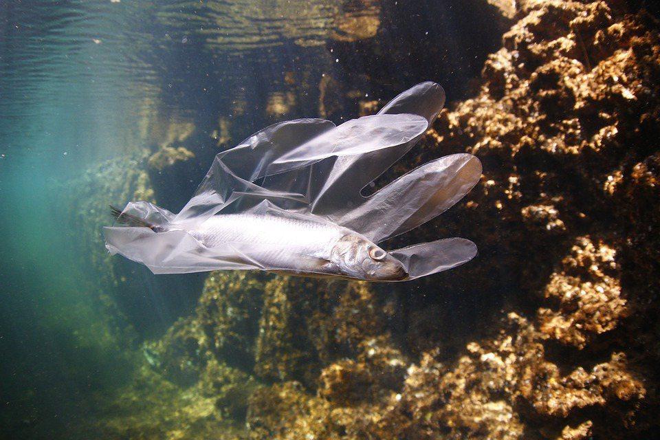 你有聽過,未來有一天,海裡的垃圾將比魚還多嗎? 圖/pixabay