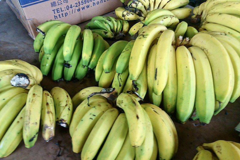 好多野生樹上成熟的香蕉。