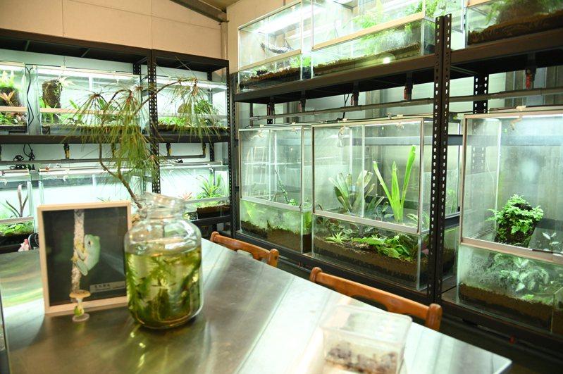 清大第一期蛙房落成,保育多種台灣原生種青蛙。圖/清大提供