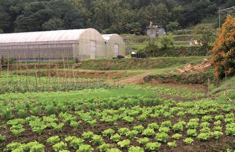 藏身白石湖的「白石森活休閒農場」,以教育、休閒、體驗為主軸,種植各式各樣蔬果,讓遊客體驗農業生產及採收的過程。圖/台北市產發局提供