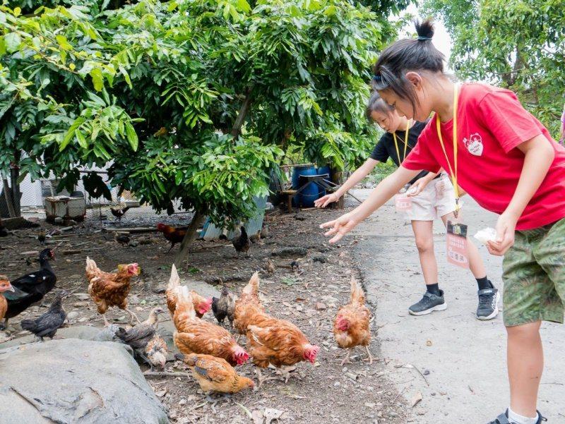 到高雄那瑪夏休閒農業區可體驗餵養放山雞的田園樂。 圖/高雄市農業局提供
