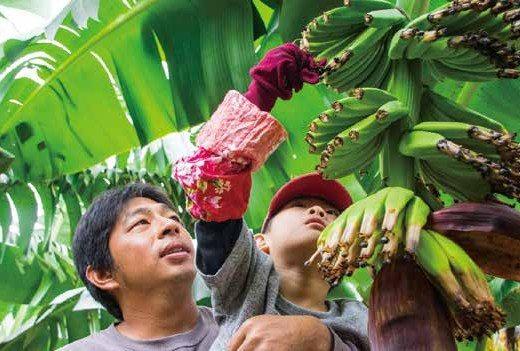 Lucas在旅行中上鐵梯,替香蕉蔬果摘花。 圖/麥浩斯提供