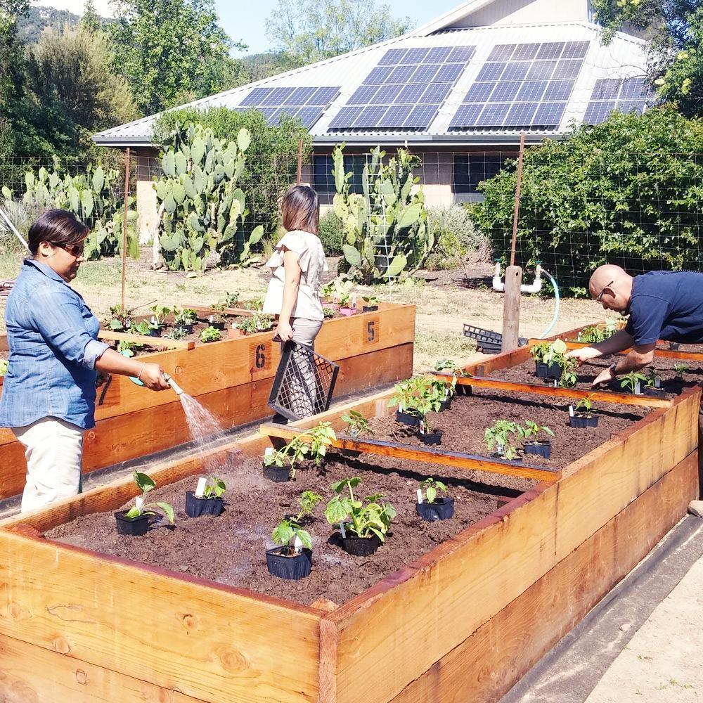 Fetzer Vineyardszs使用太陽能板節能減碳。 圖/Fetzer V...