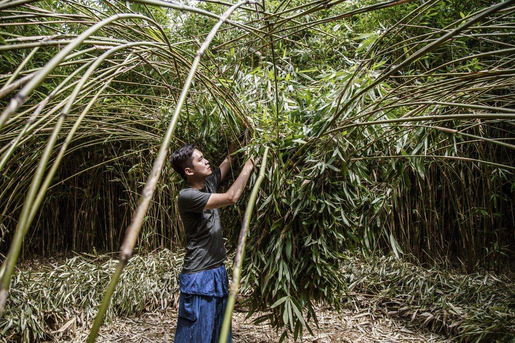 以竹等自然材質創作大型地景裝置與物件的范承宗並不想被狹隘定義為「用竹子創作的藝術...