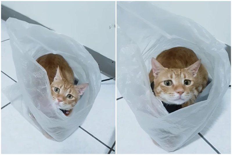 一名網友分享自家的喵星人喜歡把自己打包。圖/翻攝自爆廢公社公開版