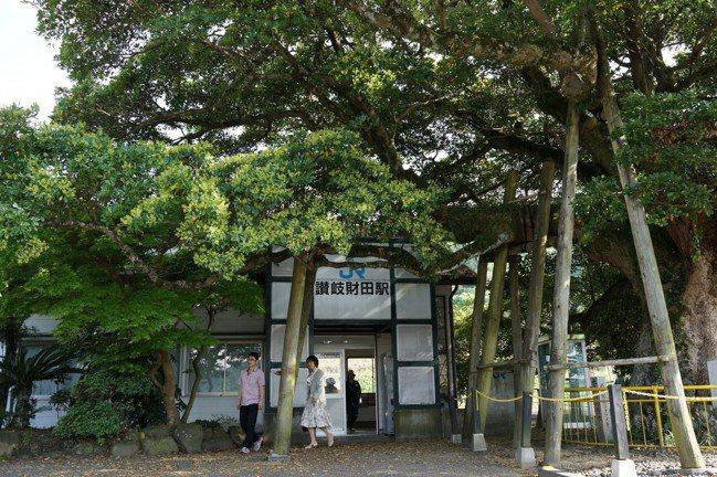 讚岐財田車站前有一棵樹齡超過700年、高13公尺、樹幹周長5.5公尺、枝幹伸展長...