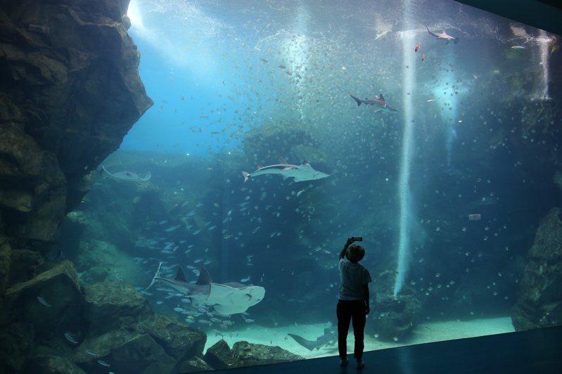 高約8公尺、寬約12公尺的台灣大水槽,是XPARK的一大重點。記者陳睿中/攝影