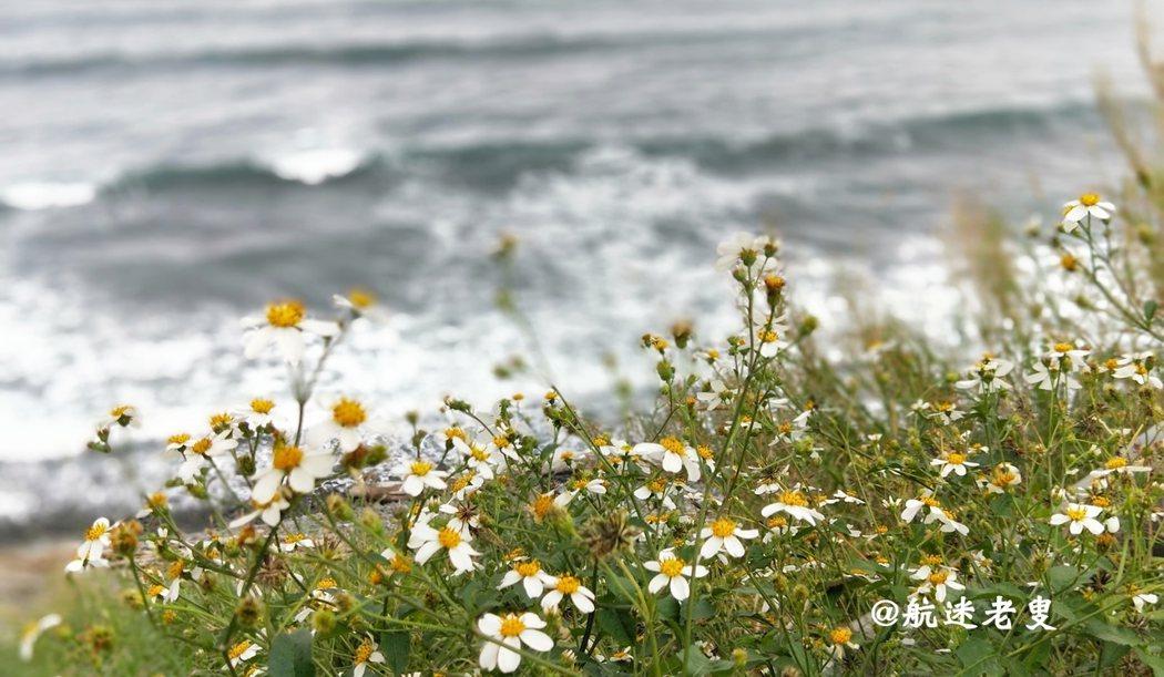 來到了都蘭海角咖啡餐廳, 有了太平洋的浪花和這片野花做為花絮, 這是一趟非常完美的旅程。