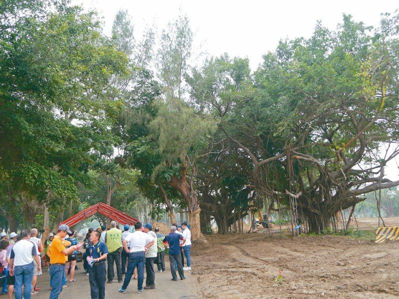中山大學仁武校區廣達24公頃,內部保存許多老樹,未來校園採無圍牆設計,可望成為適合居民休憩的森林公園。記者徐白櫻/攝影