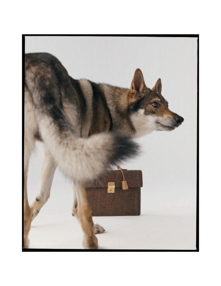 ETRO和義大利世界自然基金會合作,進行野狼的保育。圖/ETRO提供