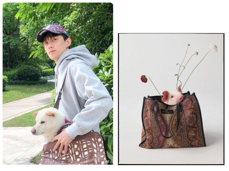 吳磊的小狗從Peekaboo雷射切割皮革包款探出頭來,ETRO秋冬包款裡裝著可愛小豬。圖/取自微博