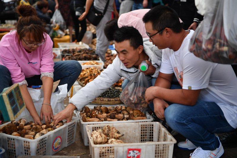 連日來,一則「2020年上半年雲南吃菌中毒死亡人數超過雲南省患上新冠肺炎死亡人數」的消息引發網友熱議,從數據看,消息屬實。 中國新聞社