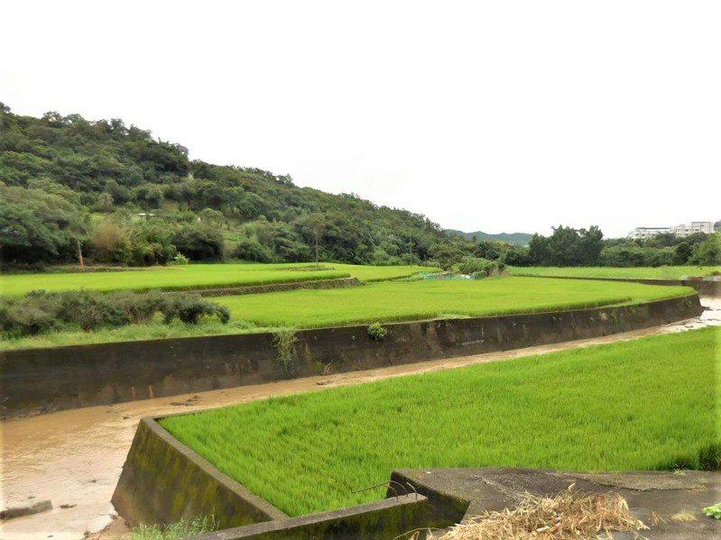 新竹縣山坡地範圍檢討變更計畫後,有6885筆土地變更,其中劃出山坡地範圍416.68 公頃,劃入2.81公頃。記者陳斯穎/攝影