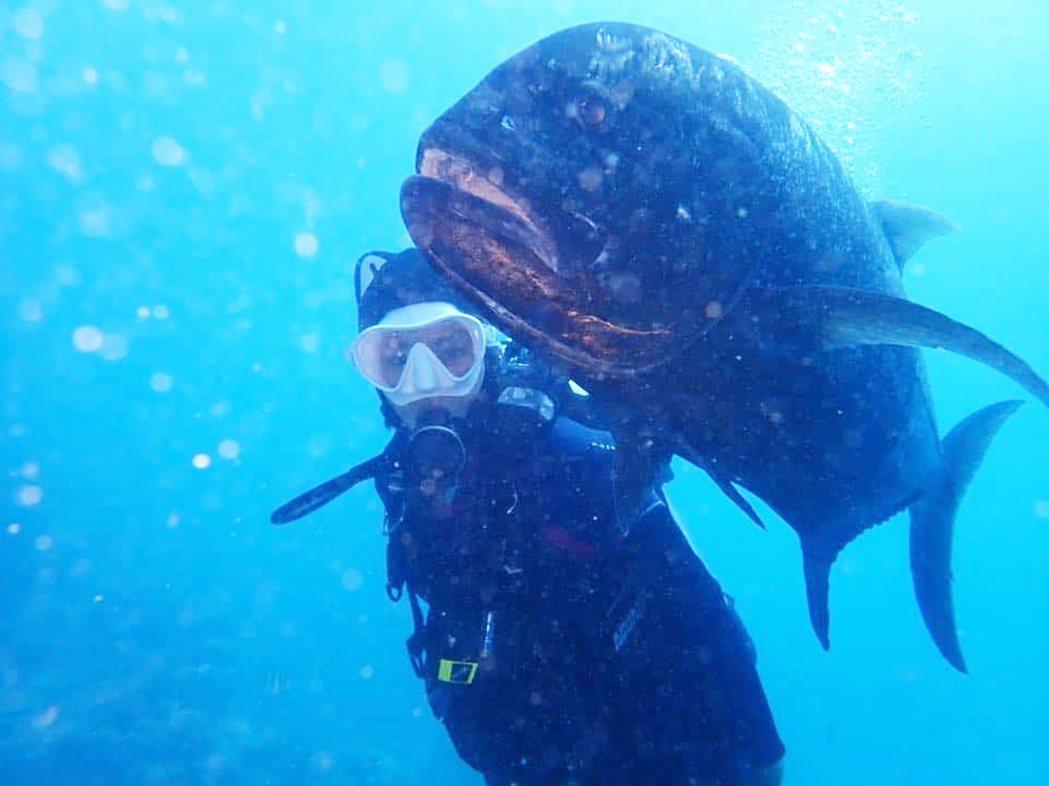 「錦繡二重唱」藝人錦雯(黃錦雯)在綠島潛水、打工換宿一個月,認識了體型巨大,可愛