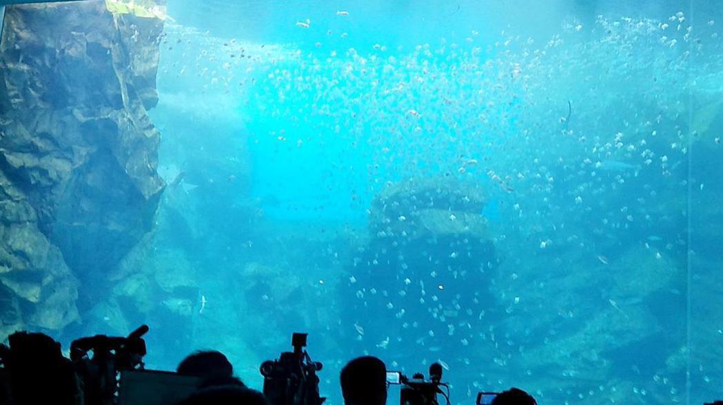 桃園市青埔的台灣首座X-park八景島水族館8月7日開幕,首見「福爾摩沙」超大魚...