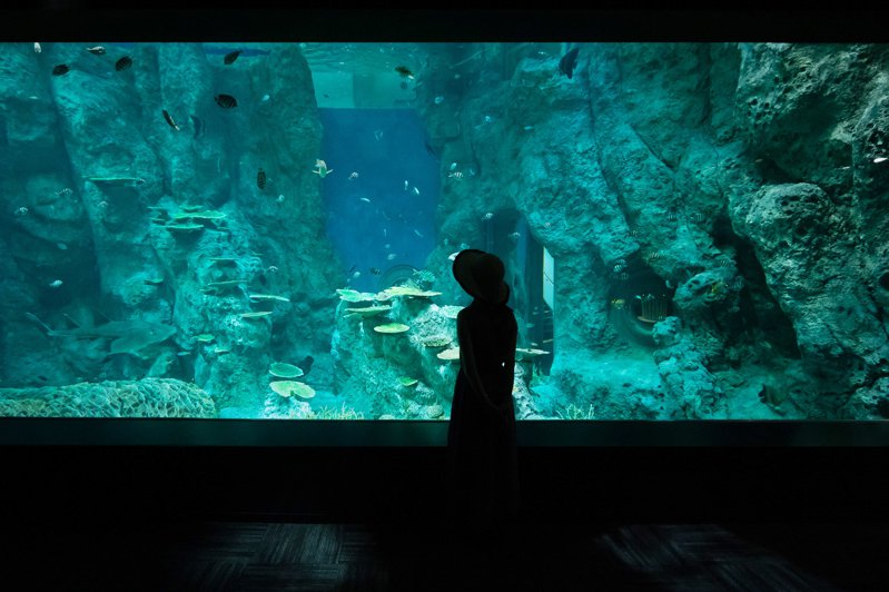 新開幕的「足摺海洋館satoumi」,乃是日本第一座與在地生態結合的水族館。圖/日本高知縣提供