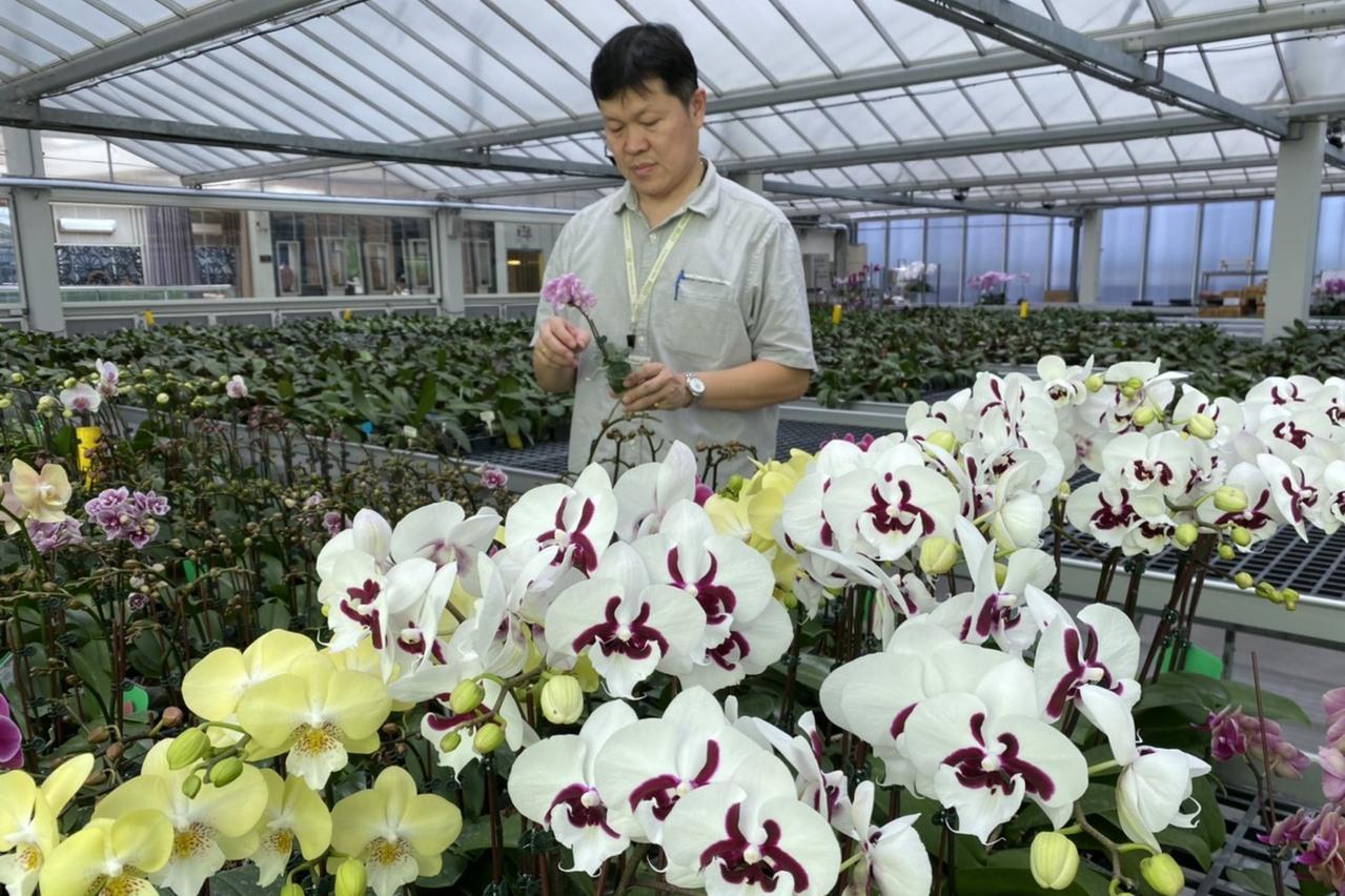 蘭花產業 從送禮走向生活