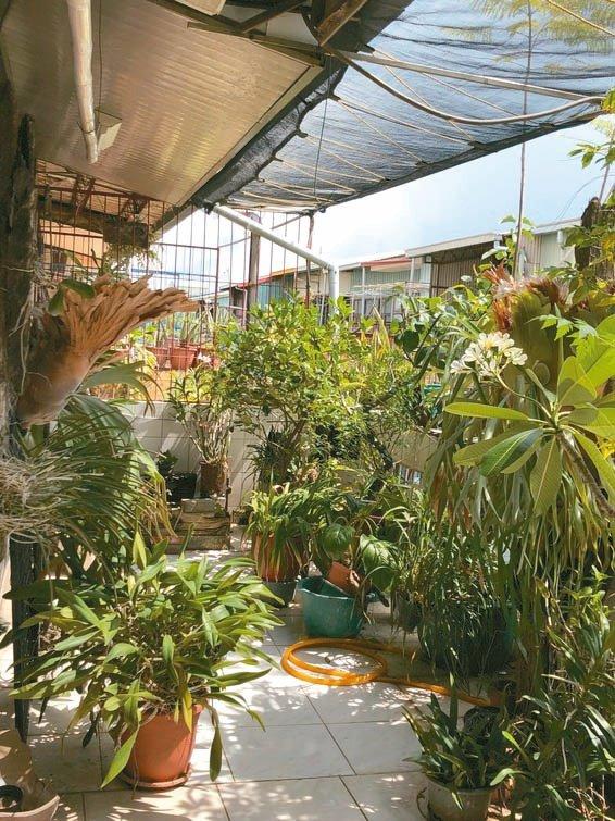 我在頂樓打造空中花園,每天澆花灑水,房間明顯變涼快。 圖/吳一忠提供