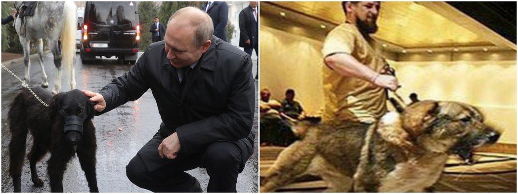 兩人在「強人」形象塑造上,似乎頗有志一同。 圖/美聯社+卡迪羅夫官網